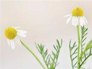 15 علاج للبواسير في المنزل بدون طبيب أو جراحة 3