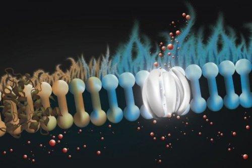 دواء للفطريات يظهر نجاحاً في علاج التليف الكيسي الرئوي