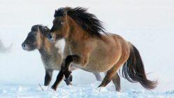 محاولة لإستنساخ حصان منقرض منذ 42 ألف عام 1
