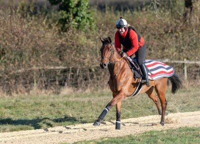 Rupert Gibson Photography 2018 - Equestrian -1