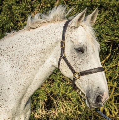 Rupert Gibson Photography - Equestrian - 01 - Henry