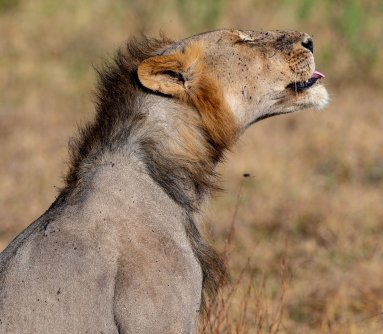 Rupert Gibson Photography - 2018 Tanzania Safari images from the Selous Game Reserve-10