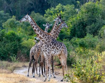 Rupert Gibson Photography - 2018 Tanzania Safari images from the Selous Game Reserve-108