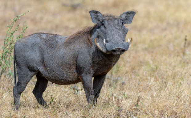Rupert Gibson Photography - 2018 Tanzania Safari images from the Selous Game Reserve-119