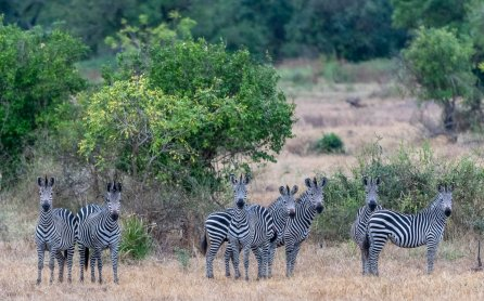 Rupert Gibson Photography - 2018 Tanzania Safari images from the Selous Game Reserve-128