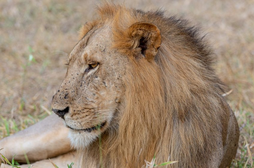 Rupert Gibson Photography - 2018 Tanzania Safari images from the Selous Game Reserve-14