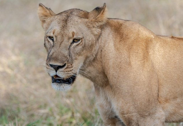Rupert Gibson Photography - 2018 Tanzania Safari images from the Selous Game Reserve-24