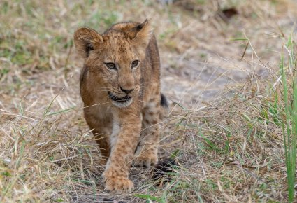Rupert Gibson Photography - 2018 Tanzania Safari images from the Selous Game Reserve-28