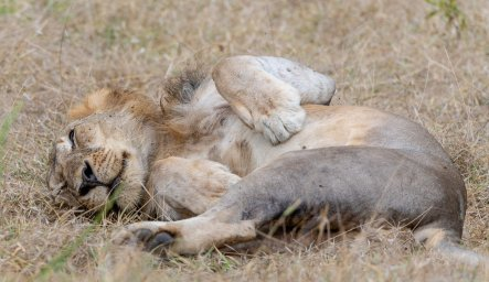 Rupert Gibson Photography - 2018 Tanzania Safari images from the Selous Game Reserve-35