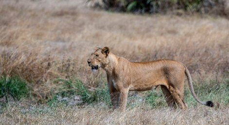 Rupert Gibson Photography - 2018 Tanzania Safari images from the Selous Game Reserve-44