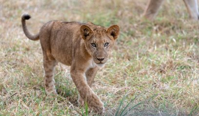 Rupert Gibson Photography - 2018 Tanzania Safari images from the Selous Game Reserve-5