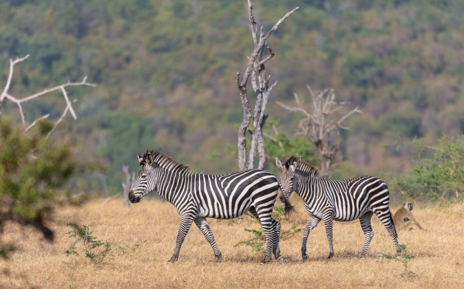 Rupert Gibson Photography - 2018 Tanzania Safari images from the Selous Game Reserve-63