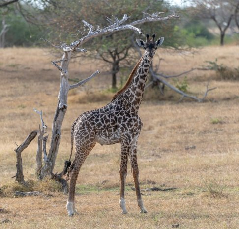 Rupert Gibson Photography - 2018 Tanzania Safari images from the Selous Game Reserve-65