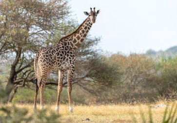 Rupert Gibson Photography - 2018 Tanzania Safari images from the Selous Game Reserve-66