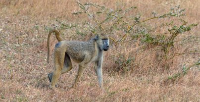 Rupert Gibson Photography - 2018 Tanzania Safari images from the Selous Game Reserve-67