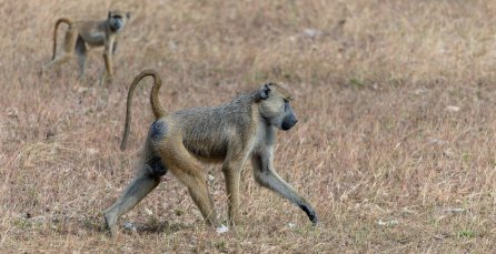 Rupert Gibson Photography - 2018 Tanzania Safari images from the Selous Game Reserve-68