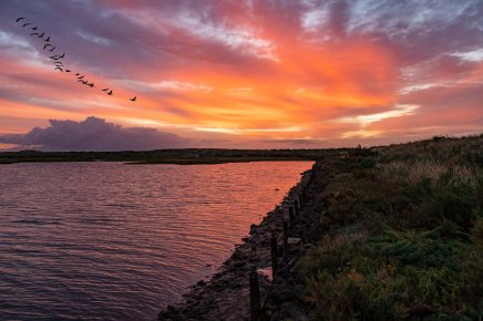 Rupert Gibson Photography -sunset with geese. low resjpg1