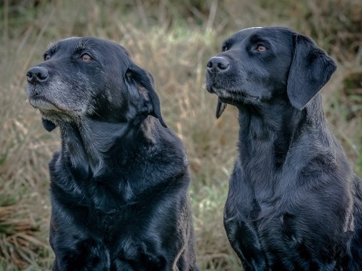 Rupert Gibson Photography 2019 Portraits - labs 2