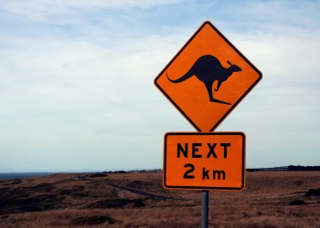 Fast hätte Lisa ein Känguru überfahren!