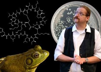 Seit seiner Dissertation forscht Cornelius Domhan am Ochsenfrosch-Antibiotikum. Bild: aro