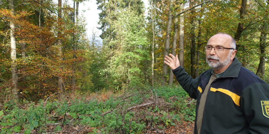 Wolfgang Ernst hat als Förster für den Heidelberger Wald bereits das Waldsterben in den 80ern und die Jahrhundertstürme seit den 90ern erlebt. Foto: jfs