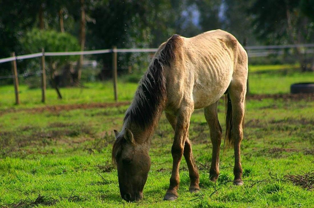 Raças de cavalo portuguesas