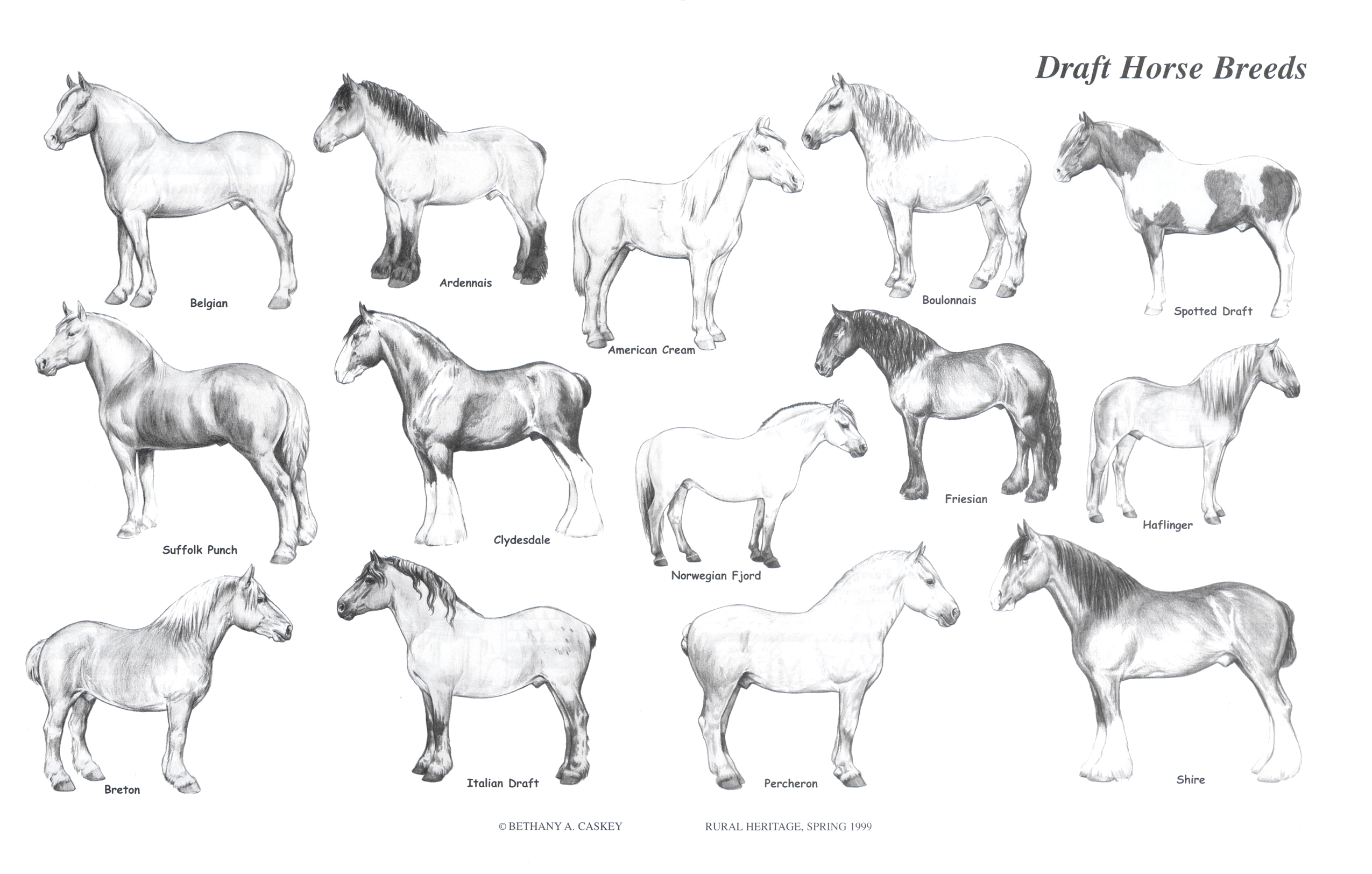 Graphics For Horse Mounts