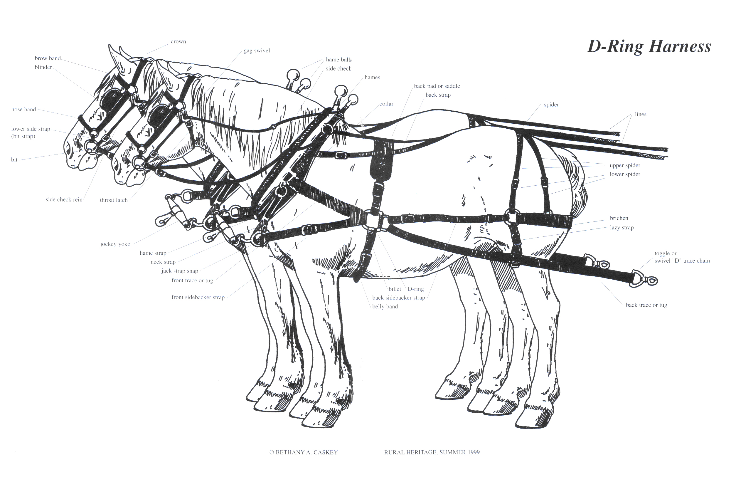 Rural Heritage D Ring Harness Illustration