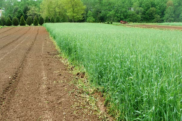 Narrow rows conserve resources, reduce costs