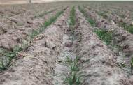 Healthy Soil Is a Weather Risk Management Tool, According to Report