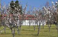 Pruning Fruit Trees: Tips and Tricks