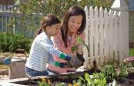 Watering Fruit Plants During the Summer