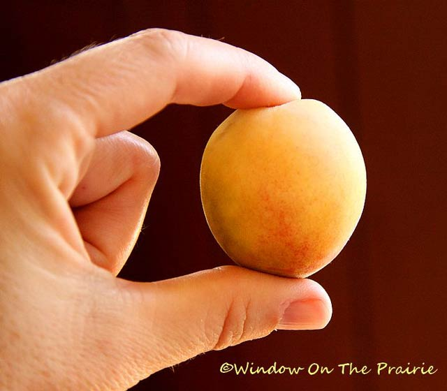 How to freeze apricots