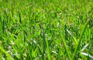 Taking Care of Your Lawn care Month-to-Month