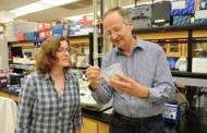 Kansas State University, Australian researchers join forces to combat insect pest