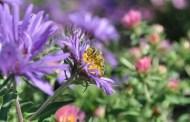 Annual fall tour of KU medicinal garden set for Sept. 30