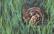 Leave Wildlife Where It Belongs, Wild