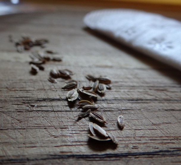 How to Test Old Seeds for Viability