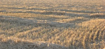 Barley Council looking to grow industry in 2015