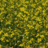 Mitigating the spread of clubroot