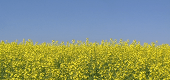 Expanding your marketing options for your crop during a trade dispute