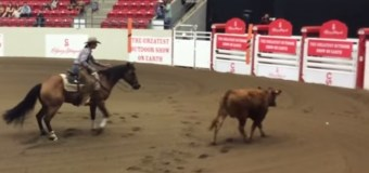 Calgary Stampede Working Cow Horse – Open Bridle Class Finals Highlights