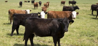 McDonald's Sustainable Beef Pilot Project Hailed a Success