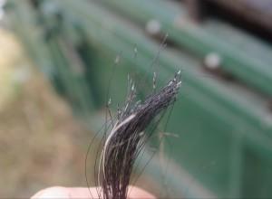 cattle_hair_dna_sample_3