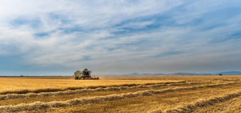 Alberta harvest continues to be ahead of schedule