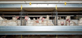 AFAC: The past, present and the future of Hen Housing – An industry full of changes