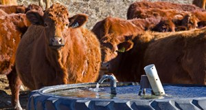 BCRC: The Canadian beef industry's water footprint is shrinking