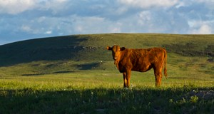 BCRC: Eight beef producers share their recent changes