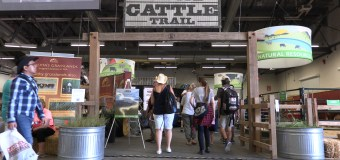 UFA Cattle Trail once again a huge attraction at Calgary Stampede