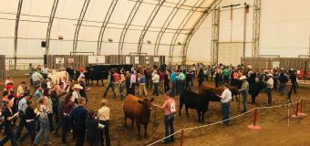 International Youth Supreme Livestock participants show off skills at Calgary Stampede